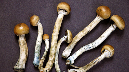 Čarobne gljive